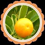 bergamociu eterinis aliejus